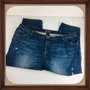 Lane Bryant Blue Distressed Crop Jeans Size 22 EUC